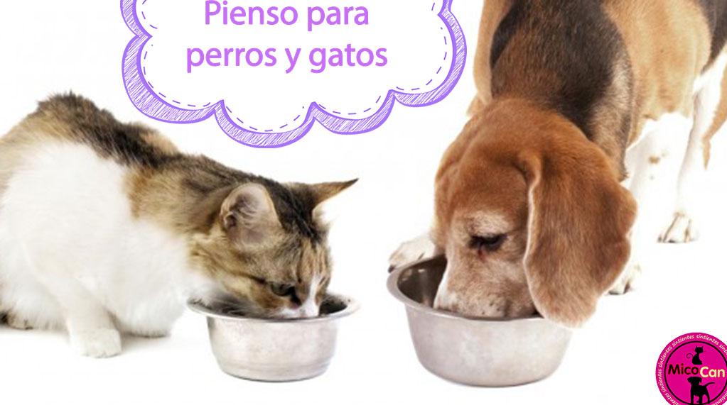 Piensos para perros y gatos en Cegama-Guipúzcoa.
