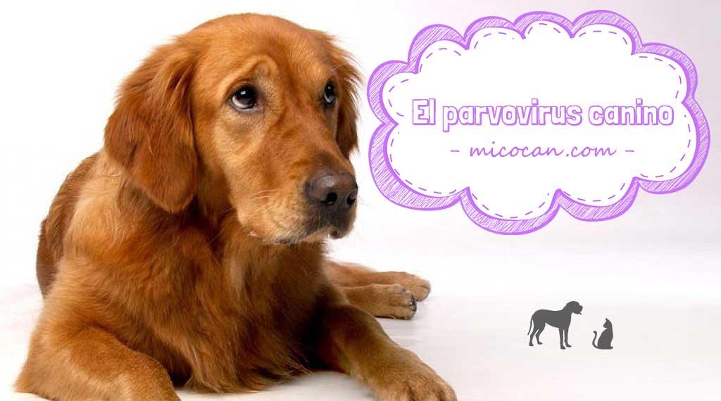 El parvovirus canino: Síntomas, tratamiento y prevención.