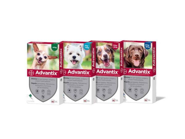 pipetas antiparasitarias advantix para perros