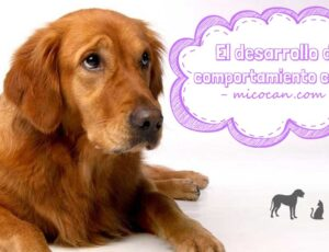 Desarrollo del comportamiento canino.