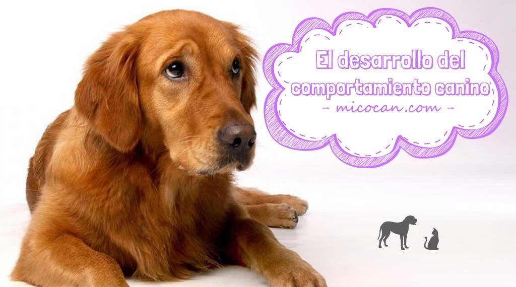 desarrollo del comportamiento canino