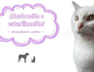 Esterilización o castración en los gatos. Diferencias, pros y contras.