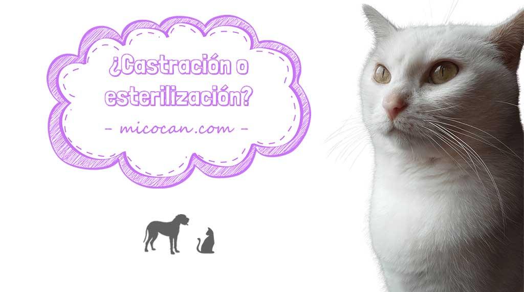 gato micocan castracion esterilizacion