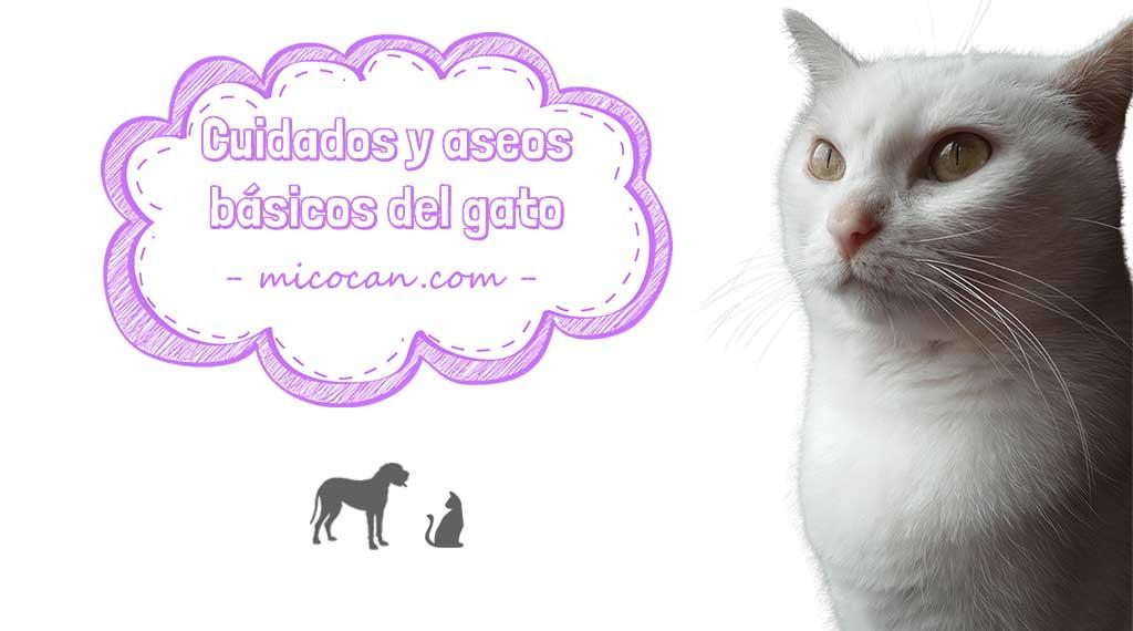 cuidados y aseos básicos del gato