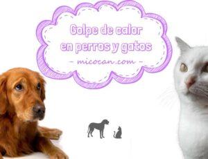 Golpe de calor en perros y gatos