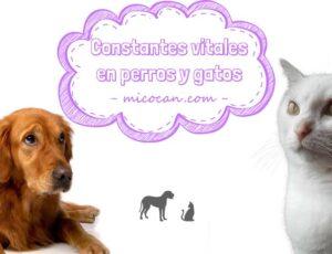 4 constantes vitales que debemos controlar de nuestros perros y gatos