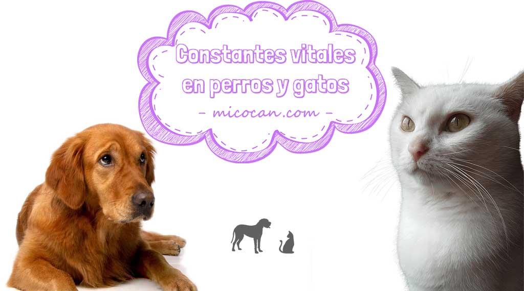 constantes vitales de perros y gatos